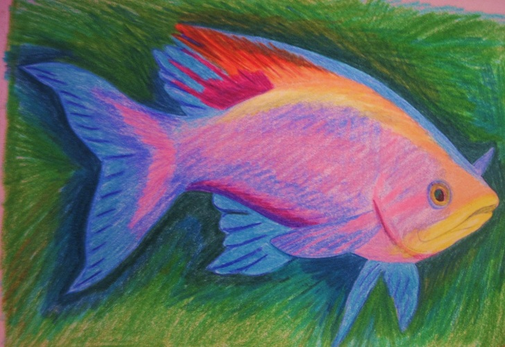 Fish drawings with color